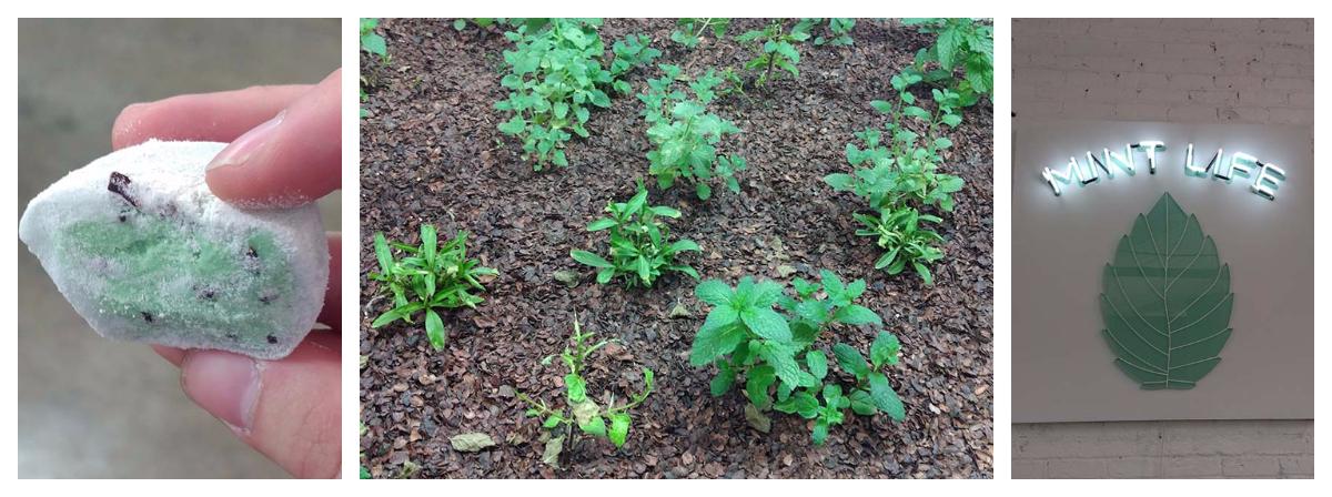 mint mochi, mint plants, and mint life